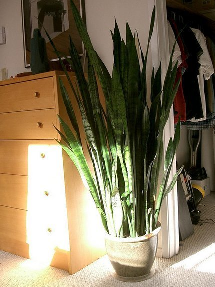 Best 10 House Plants To De Stress Your Home – Maryslivinggardens With Pictures
