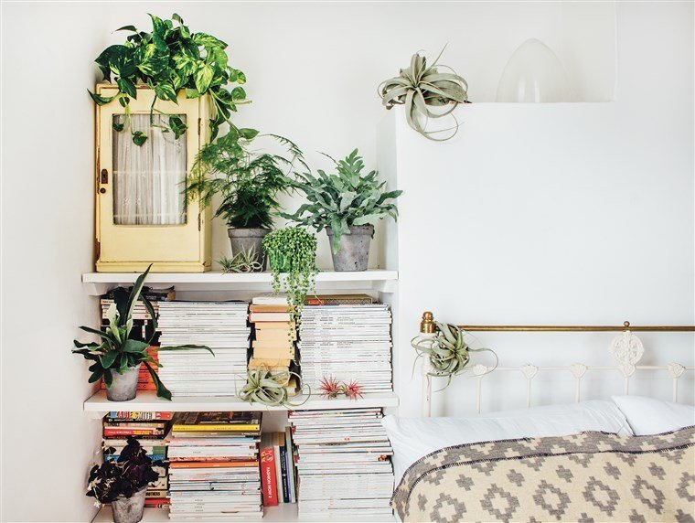 Best Why Indoor Plants Make You Feel Better With Pictures