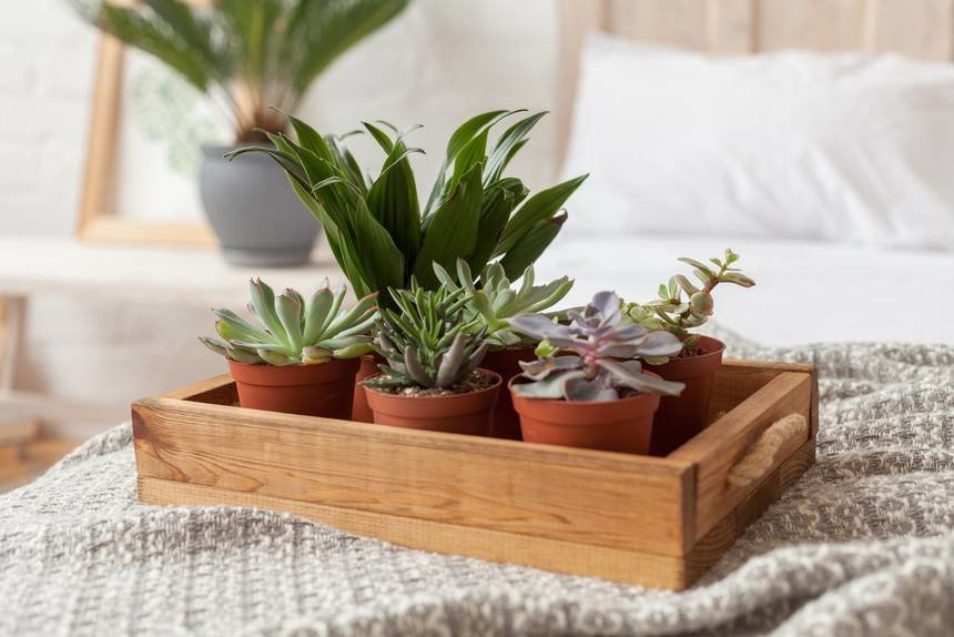 Best 8 Bedroom Plants To Improve Your Sleep Treehugger With Pictures