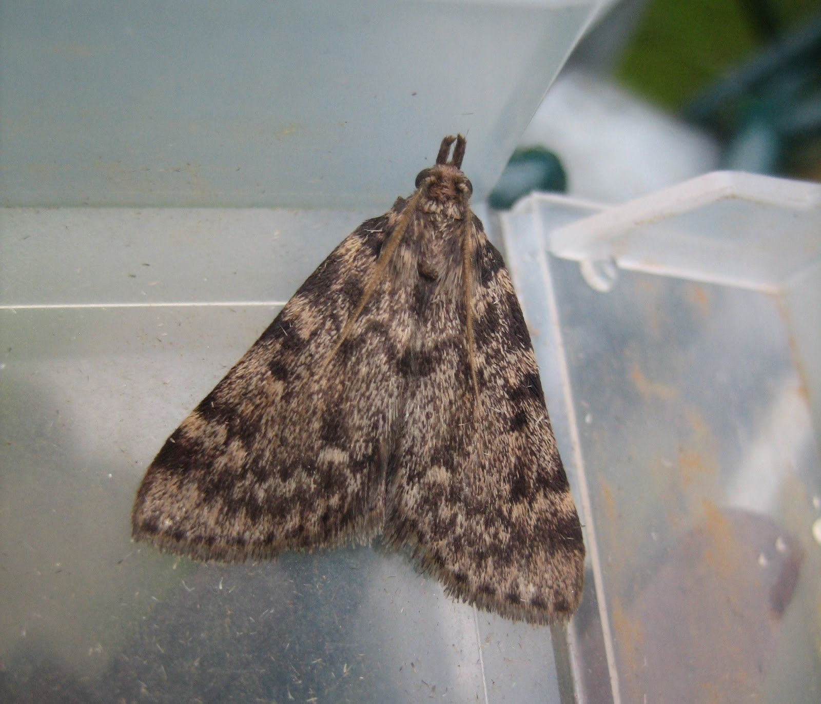 Best Baby Moths In Bedroom Www Indiepedia Org With Pictures