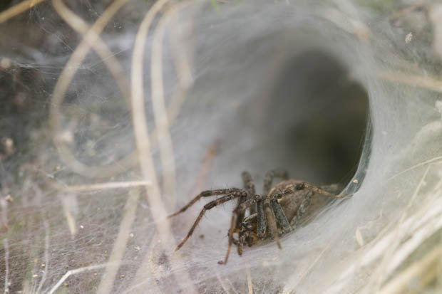 Best Brit Finds Huge Fanged Spider Near Grandkids Bedroom In With Pictures