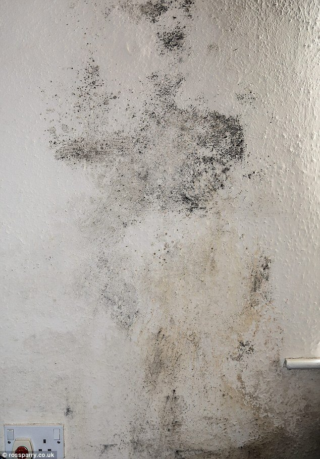 Best Couple Forced Out Of Their Home By Damp And Mouse With Pictures