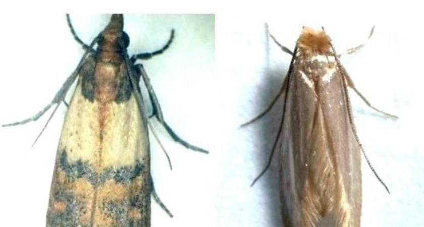 Best 25 Moths In Bedroom That Will Steal The Show Lentine With Pictures