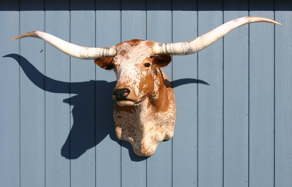 Best Decor – Longhorns Head To Tail Store With Pictures