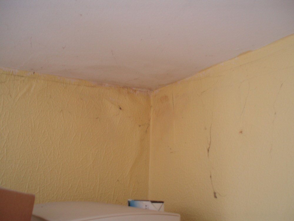 Best Fix Source Of Damp At Top Of Upstairs Bedroom Wall Damp With Pictures