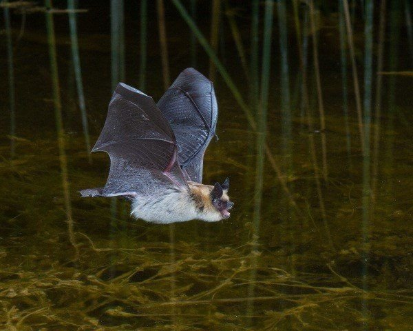 Best Do You Need Rabies Shots If A Bat Gets In Your House With Pictures