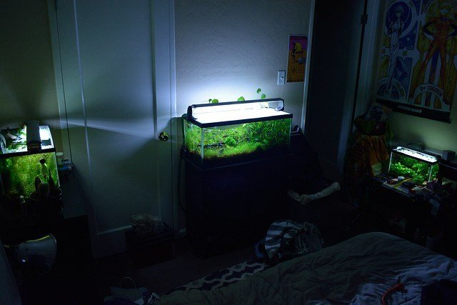 Best 3 Tanks One Bedroom 5 10 20L 7 22 15 The Planted Tank Forum With Pictures