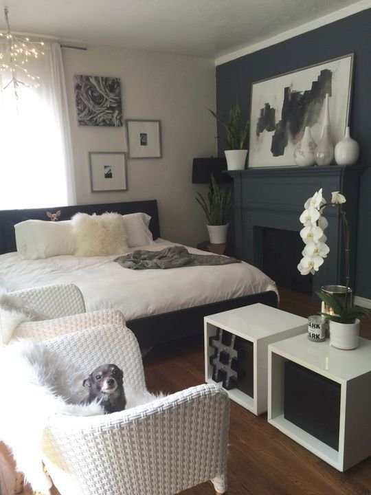 Best Dogs First Lovely Room Second Kristy S Escape From The With Pictures