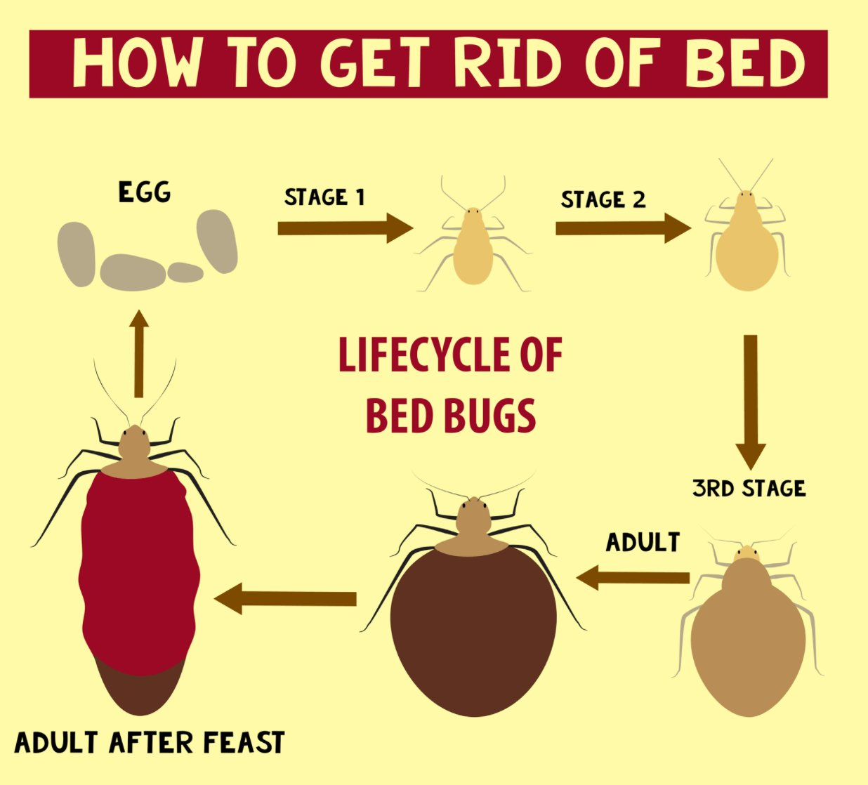 Best How To Get Rid Of Bed Bugs Infographic Thepestkillers With Pictures