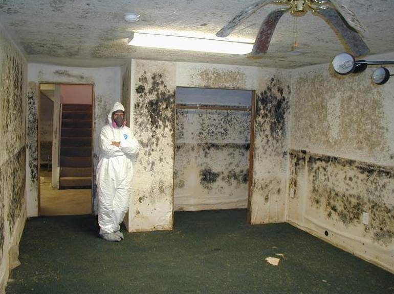 Best Mold Remediation In Western Michigan Vandam Krusinga With Pictures