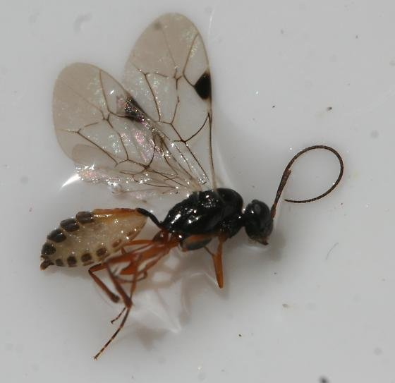 Best How To Get Rid Of Ants Bedroom Red Wasp Trap Cluster Fly With Pictures
