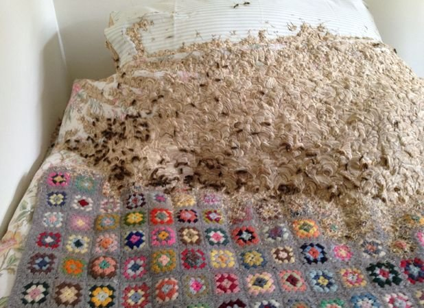 Best Man Discovers Giant Wasp Nest In His Mum S Spare Room With Pictures