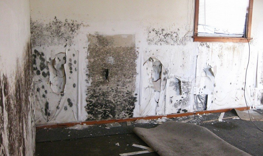 Best How To Remove Black Mold From Carpet And Walls With Pictures