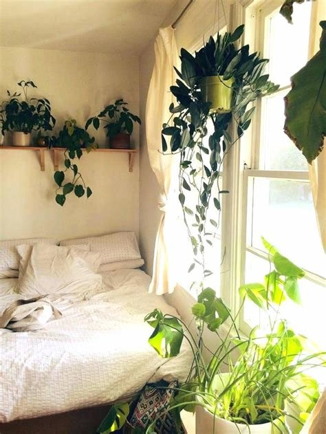 Best Hanging Plants For Bedroom Online Information With Pictures