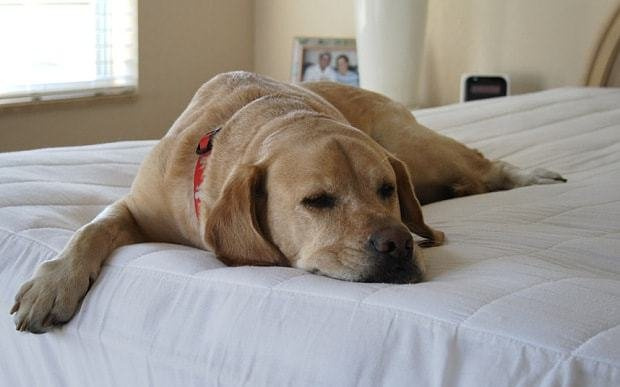 Best Want A Better Night S Sleep Share Your Bed With A Pet Telegraph With Pictures