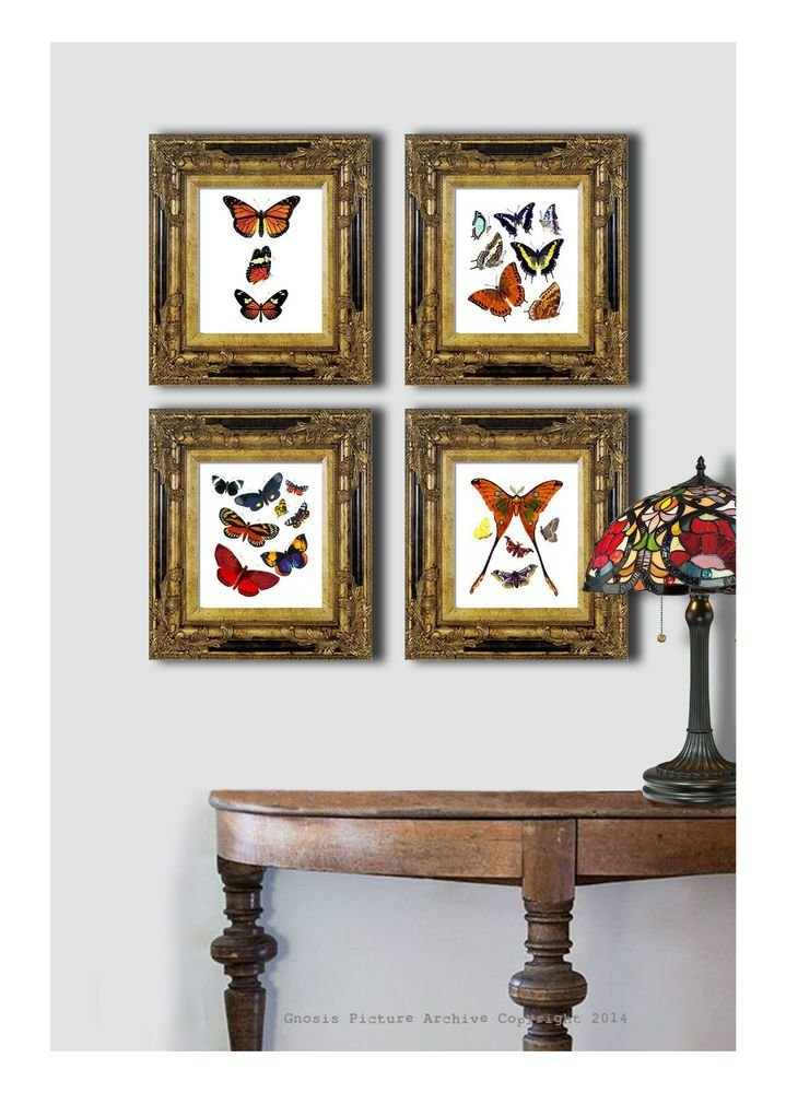Best Set Of 4 Antique Butterfly Prints Home Interior Decor With Pictures
