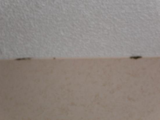 Best Bedroom Ceiling Mold Picture Of Newcastle Hotel Virginia Beach Tripadvisor With Pictures