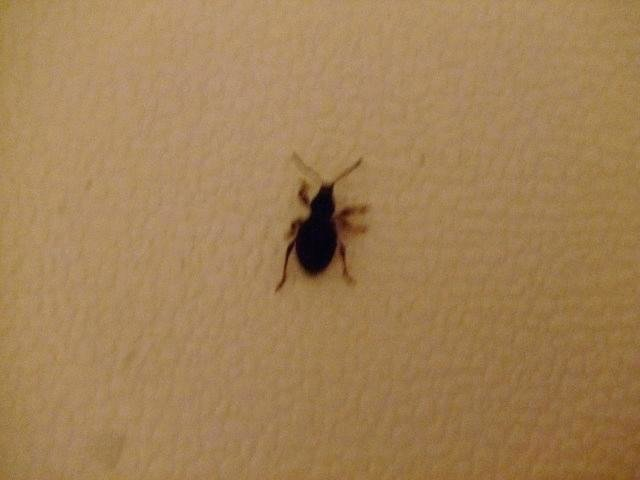 Best Little Black Beetles In House Architectural Designs With Pictures