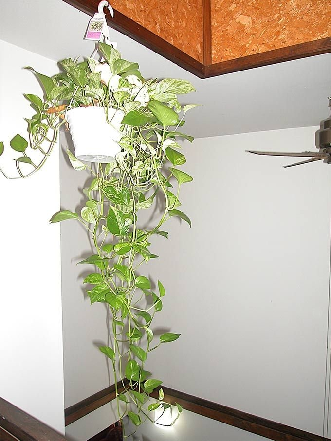 Best Indoor Plants That Purify Air In Living Spaces With Pictures