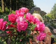 City of Roses...Plus One