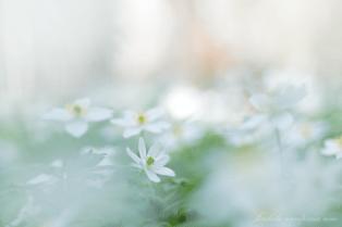 DSC_1482_2