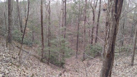 This is what our land looks like. At least, I think this is ours. I haven't traced out the property lines yet.