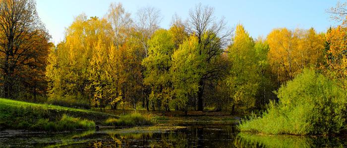 moscow botanical garden