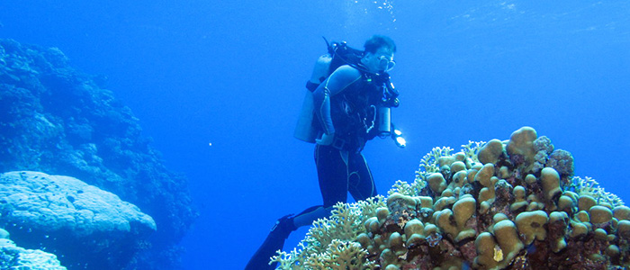 things to do in Egypt- scuba diving
