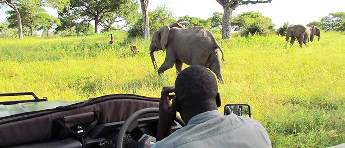 Female Solo Travel in Africa: Striking Safaris