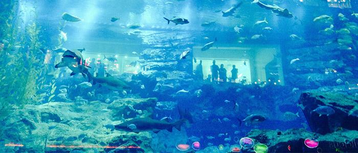 Underwater aquarium and zoo dubai