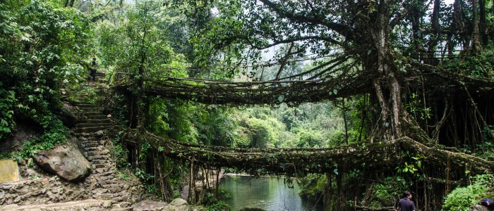 Things to do in India  - Living root bridges
