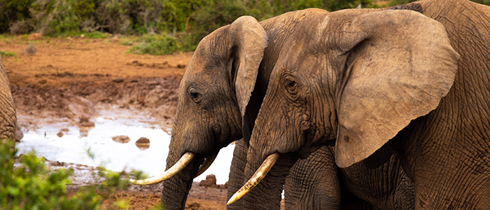 Things to do in South Africa - Addo Elephant National Park