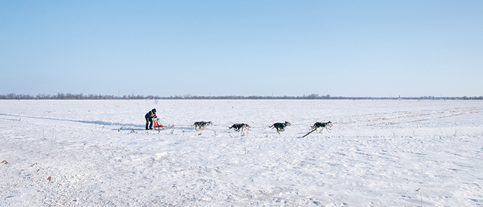 Things to do in Greenland - Dog-sledding tour