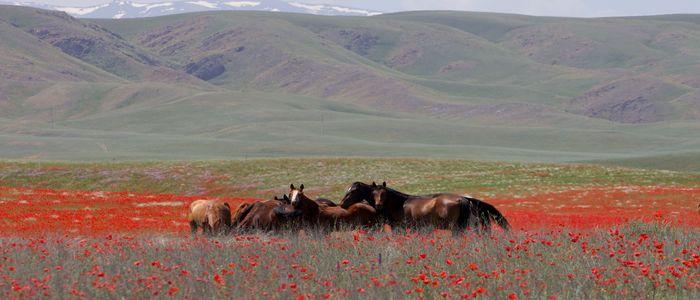 Kazakhstan Tourist Activities- Eurasian Steppe