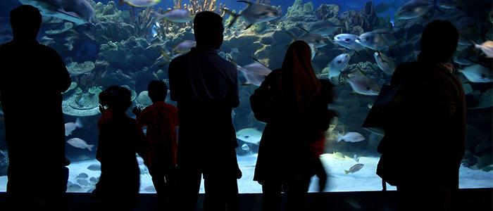 Top Things To Do In Kuala Lumpur - Aquaria KLCC