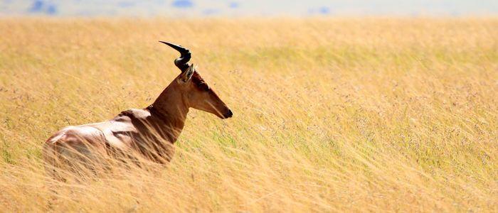 Best Tourist Destinations - Kenya