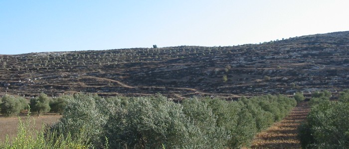 top things to do in Palestine - Hiking Palestine