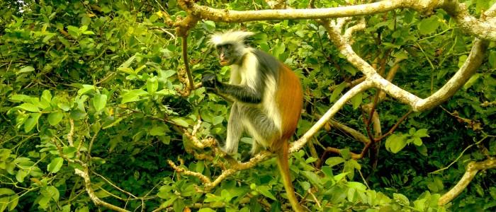 Things To Do In Zanzibar - Jozani Forest
