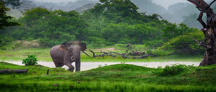Rich Wildlife Sri Lanka