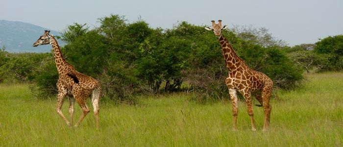 Safari in the Akagera National Park