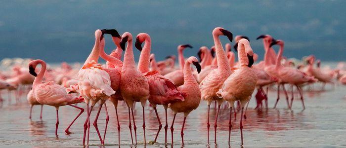 Game Drive at Lake Nakuru National Park