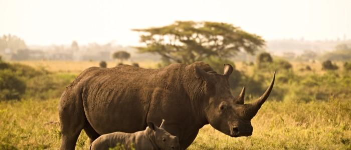 Kenya Safari Tours: Best Time