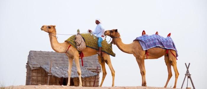 Al Marmoom Camel Race Track