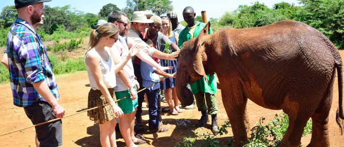 David Sheldrick Elephant Orphanage and Giraffe Centre