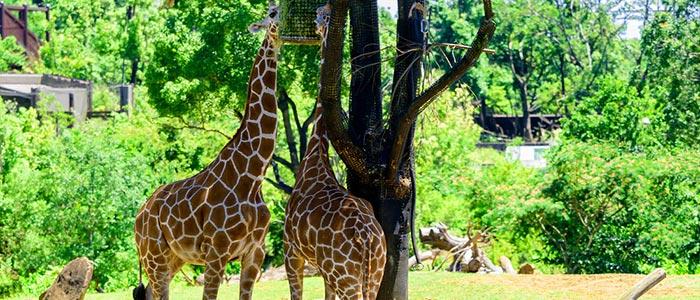 Kumasi Zoological Gardens