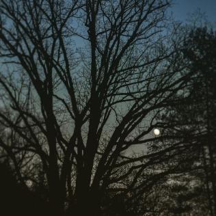 Oak moon