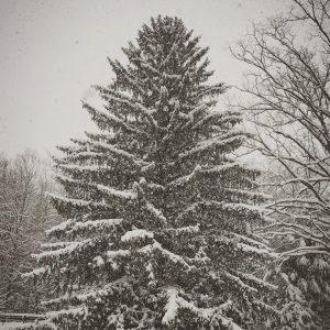 Snowypine