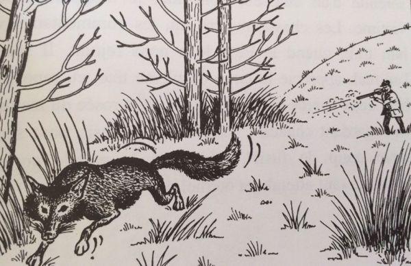 Le jour du renard