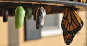 La mort de la chenille est la renaissance du papillon – Le témoignage de Yung Ja