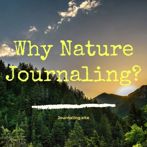 Six Reasons Why You Should Practice Nature Journaling